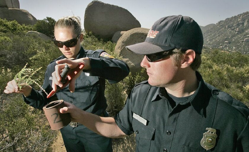 Cal Fire firefighters Rosanne Grier and Jesse Malone took samples of chamise from Mount Woodson on Thursday. The agency regularly tests the moisture in backcountry vegetation as a fire risk predictor. (John Gastaldo / Union-Tribune)