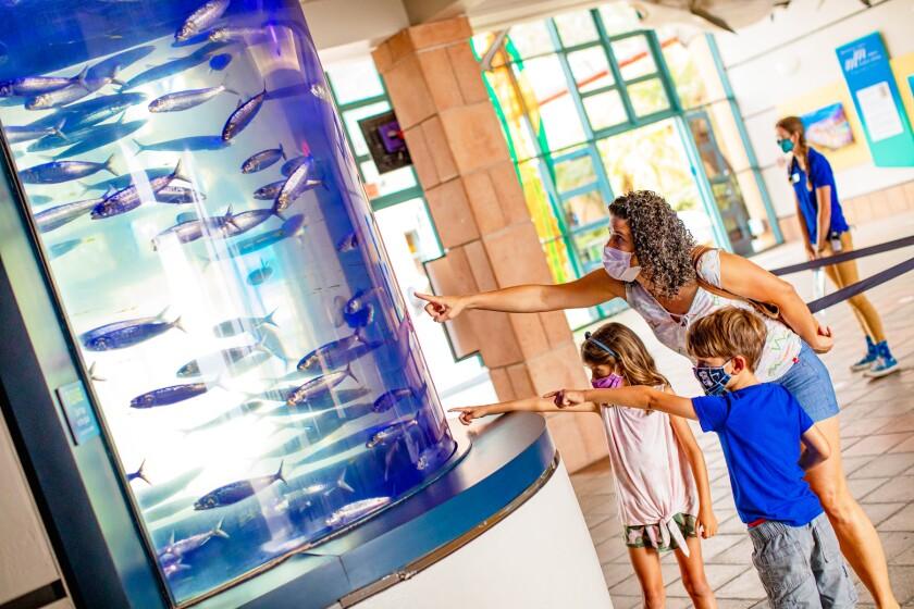 Birch Aquarium at Scripps Institution of Oceanography | aquarium.ucsd.edu