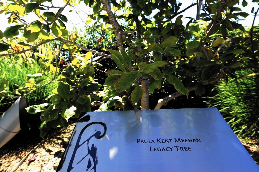 A magnolia tree dedicated to benefactor Paula Kent Meehan at St. John's Health Center in Santa Monica.