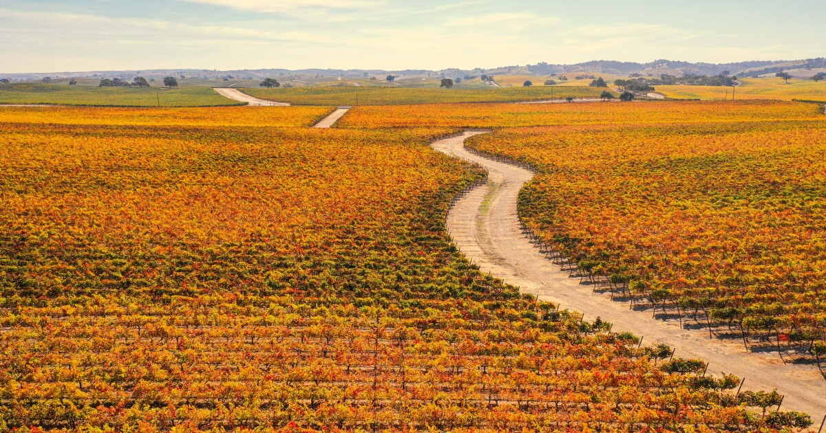 Italian-style car tour in ... Paso Robles? Of course, there's wine