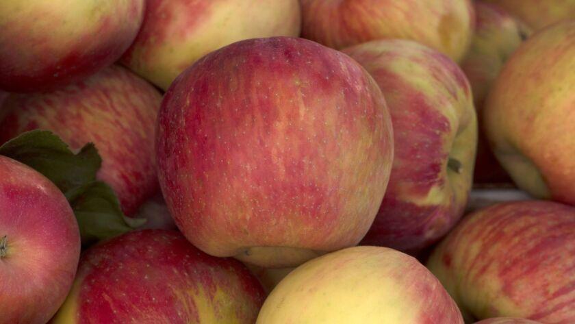 Honeycrisp apples grown by Michael Cirone in San Luis Obispo, at the Santa Monica farmers market 8/2