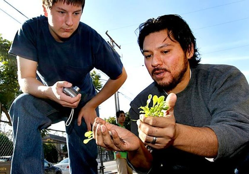 Chef Ray Garcia, right, shows Tobias Herber plants in the continuation school's garden.