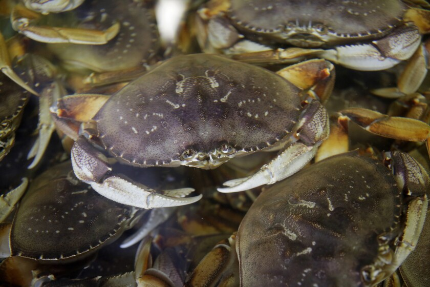 Dungeness Crab Season