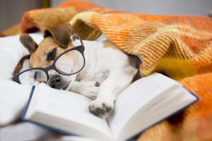 Los dueños de mascotas de California tomarían tres días libres no remunerados para cuidar a su mascota enferma.