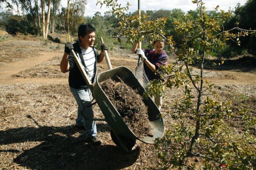 Volunteers Ramon Hernandez, left, and Jennifer Blackhall gathered mulch to put at the base of a tree in Balboa Park off of Sixth Avenue. / photo by John Gastaldo * U-T