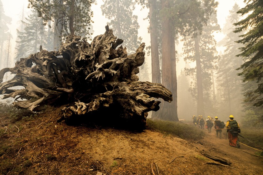 A line of firefighters wearing hard hats walk in a smoky forest