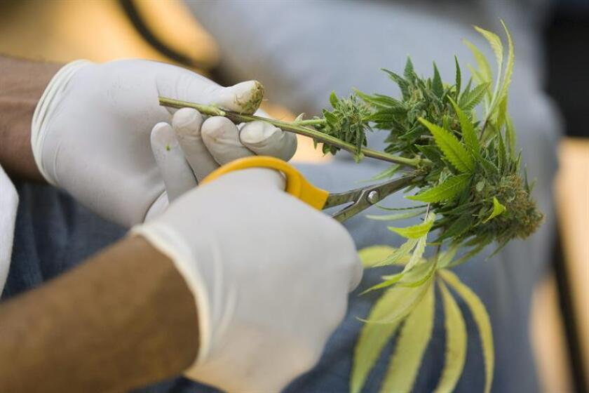 La tabacalera Altria, matriz de Philip Morris y productora de marcas como Marlboro, anunció hoy su entrada en el negocio del cannabis con una inversión de 1.800 millones de dólares en la empresa canadiense Cronos. EFE/Archivo