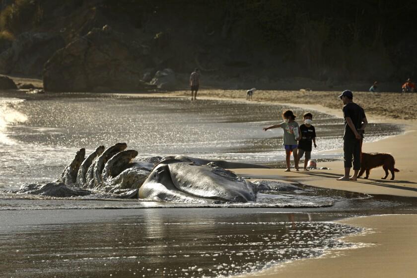 A whale on a beach.