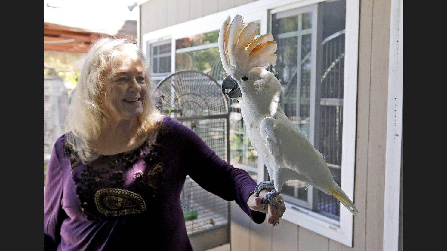 Westminster parrot sanctuary is a home for life for unwanted
