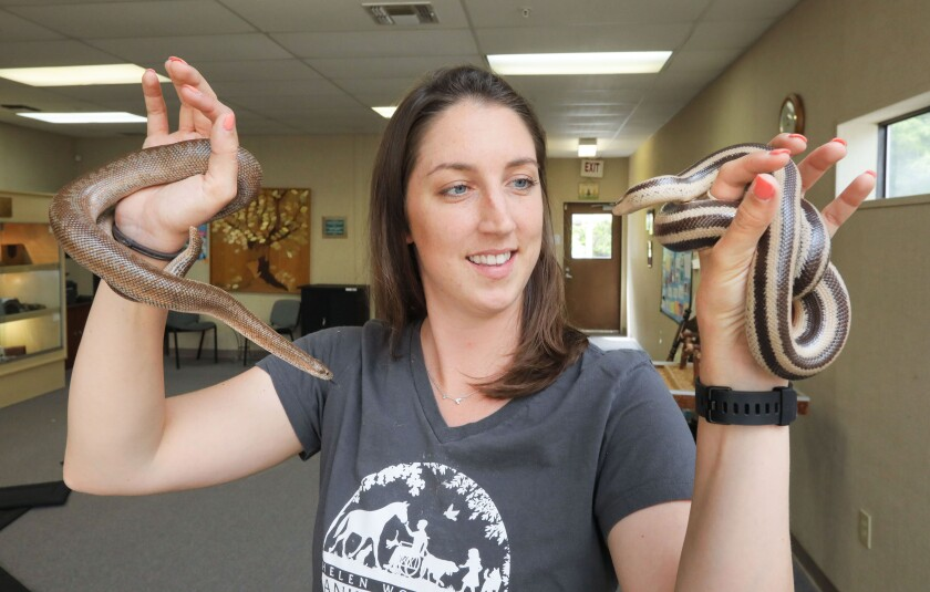 "Savannah Goehring, Animal Care Supervisor at the Helen Woodward Animal Center, holds two types of Rosy Boa snakes used in the Center's Snake Smart classes. At left is ""Cami"" and at right is ""Noodle."""