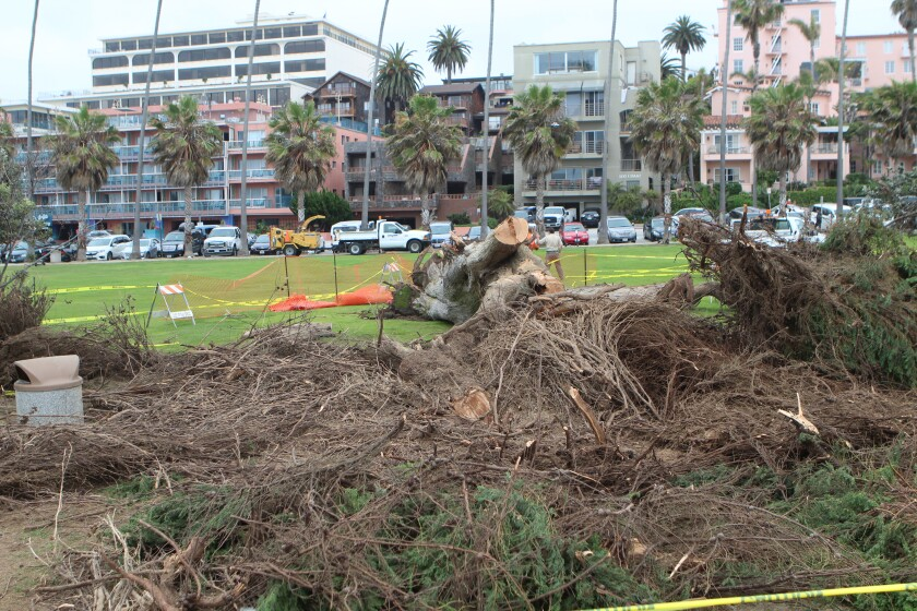 Because the tree fell at 7 a.m. on a weekday, no one was in the park and therefore, there were no injuries.