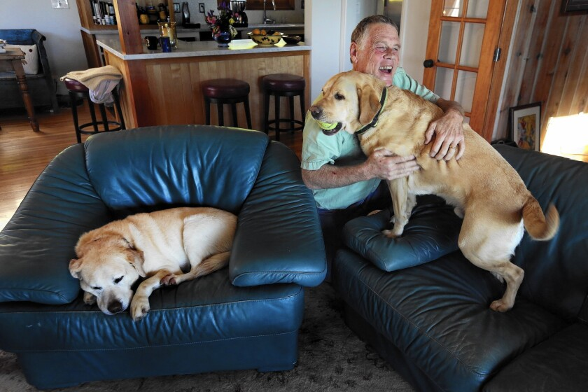 """""""I like Trump,"""" says musician Jon Gindick, 68, a registered Democrat, above with his two Labradors at his Ventura home."""