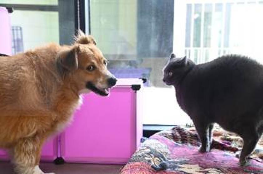 Helen Woodward Animal Center orphan pets Nalani and Sebastian have big dreams and big weight loss goals.