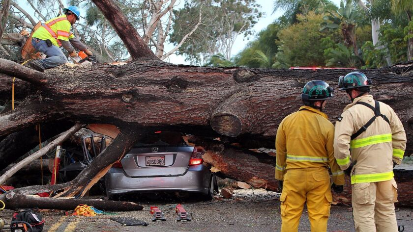 Firefighters worked to move large tree which  fell across all the lanes of Ingraham Street in Pacific Beach and crushed cars including one that was occupied,
