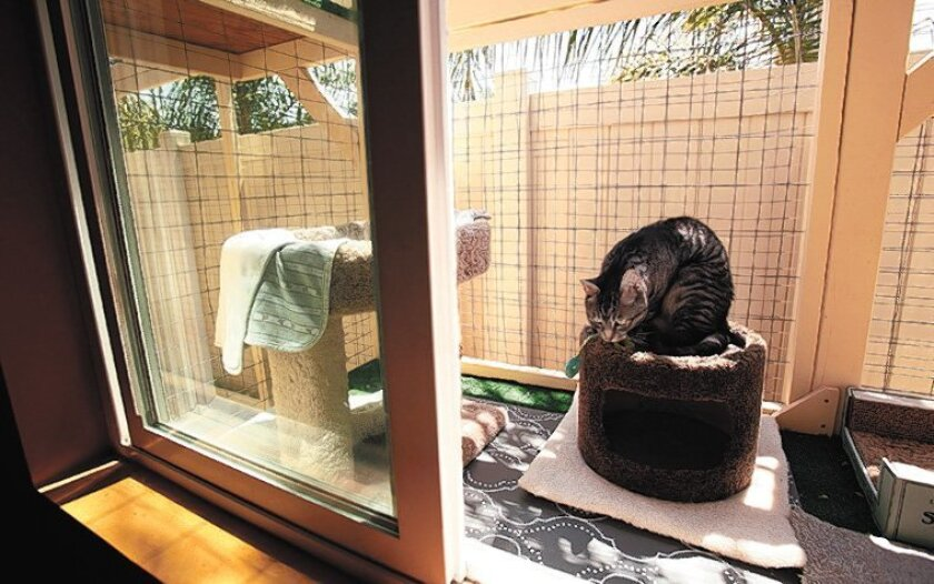 Noelle Dorman's cats have access to the catio through a bedroom window.