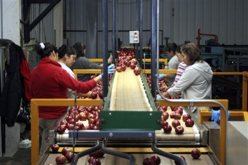 Workers sort apples by size and color as they roll down a conveyor belt at the Riveridge Produce Marketing in Sparta, Mich., Jan. 13, 2009. Michigan farmers soon will have the opportunity to express their concerns about the economy and other issues that affect them. During February and March, about 500 will take part in the annual Agricultural Resource Management Survey conducted by the U.S. Department of Agriculture. (AP Photo/James Prichard)