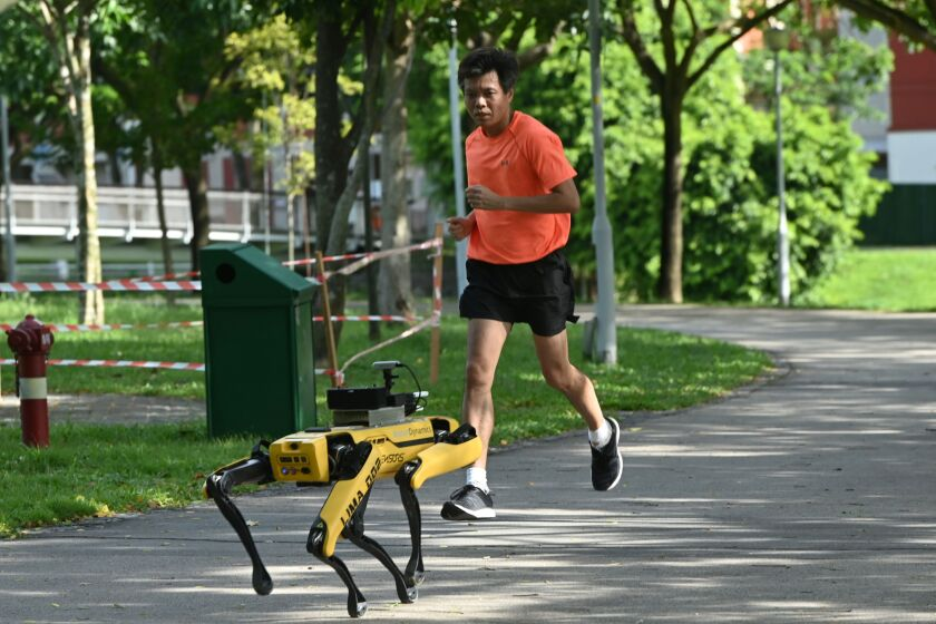 Singapore is testing Spot, a four-legged robot, in a public park to assist safe distancing efforts.