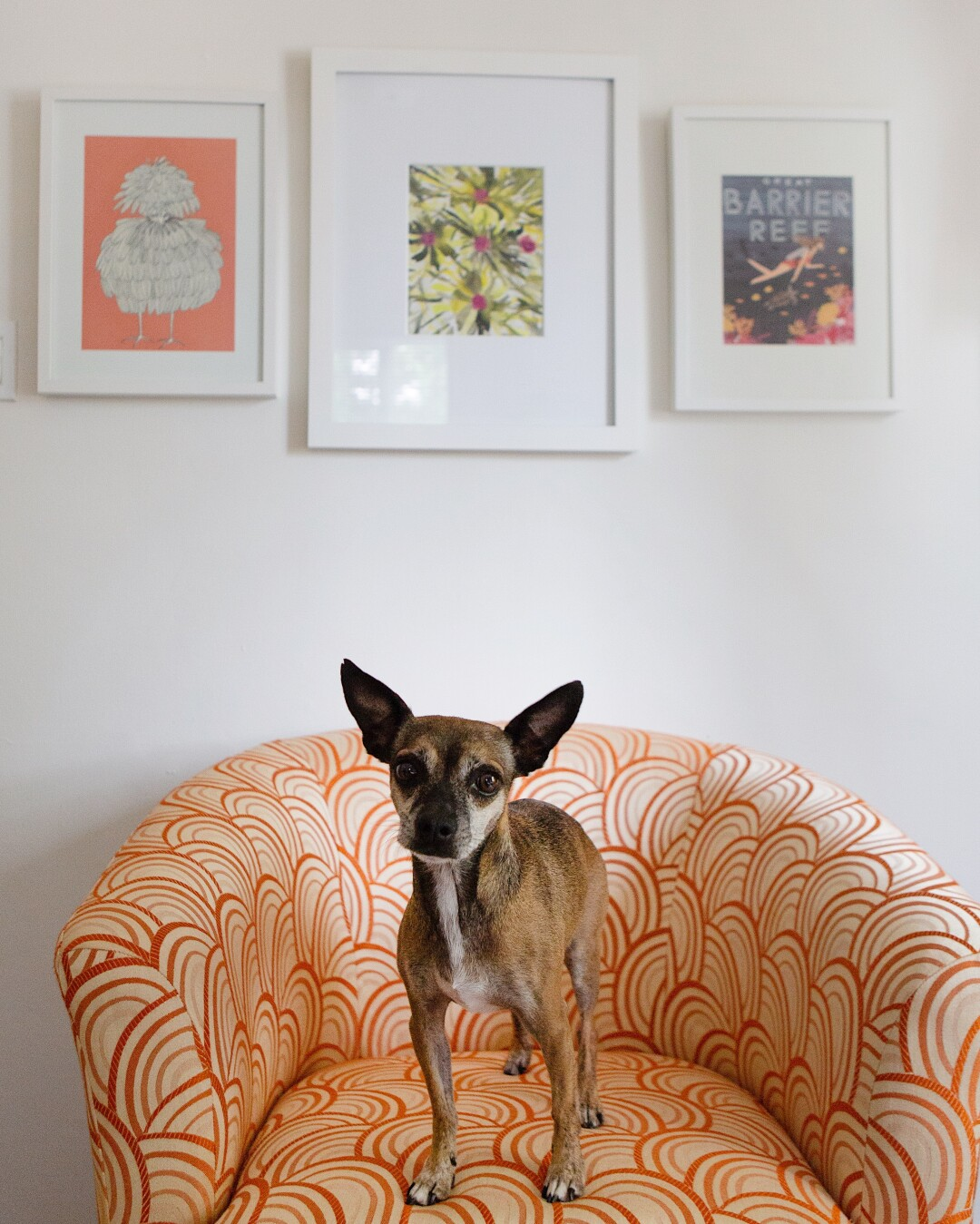 A dog stands on a chair