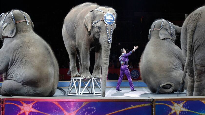 Asian elephants perform for the final time in the Ringling Bros. and Barnum & Bailey Circus in Providence, R.I. in May of 2016.