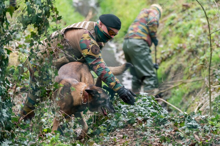 A soldier gives his dog directions as they search a wooded area in Marke, Belgium, Thursday, March 31, 2016. Authorities are searching a wooded, residential area close to the French border amid reports that the action is linked to the recent arrest of a man in Paris suspected of planning an attack. (AP Photo/Geert Vanden Wijngaert)
