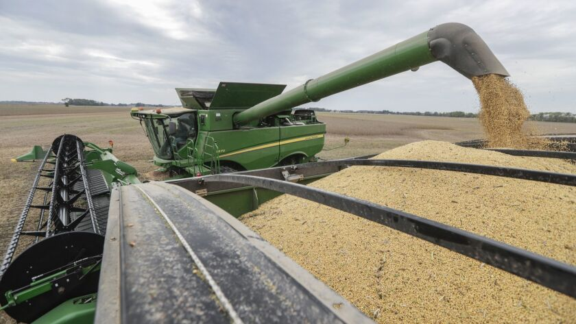 Mike Starkey offloads soybeans from his combine as he harvests his crops in Brownsburg, Ind., Friday