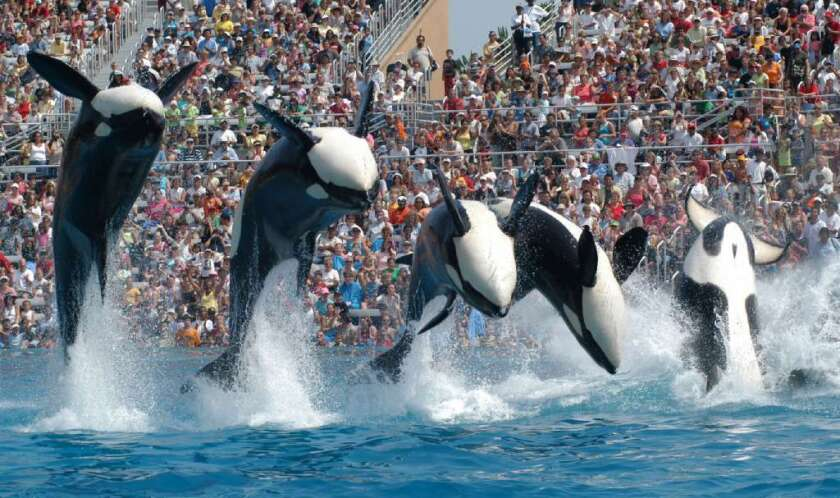 """Killer whales at SeaWorld in a 2006 performance. SeaWorld Entertainment says a drop in attendance in 2013 was not the result of a backlash from the documentary film """"Blackfish."""""""