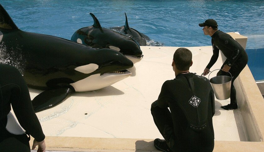 Proposed settlement would regulate close interactions between killer whales and SeaWorld trainers, both behind the scenes and in the park's show pool.