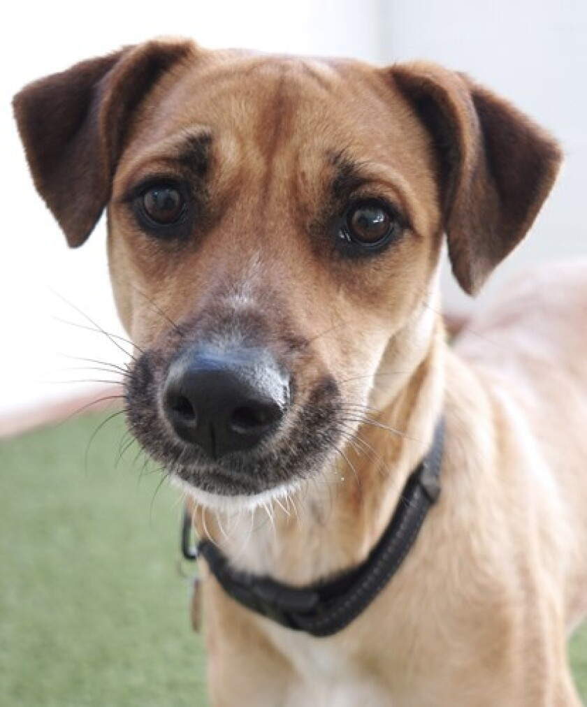 Pet of the week is a hound named Joy