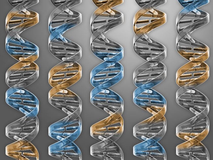 Synthetic minimal genome designed by J. Craig Venter and colleagues