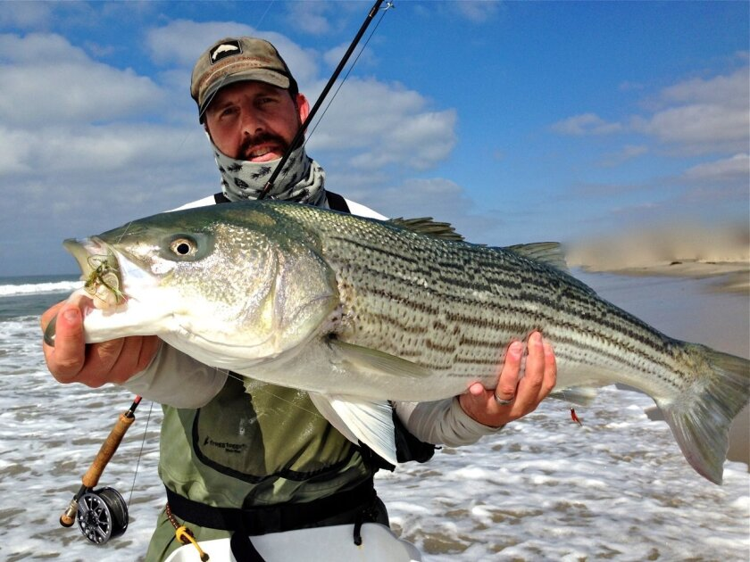 Dave Schonzeit used a personal hand-tied fly to fool an estimated 30- to 40-pound striped bass while surf fishing off a North San Diego County beach.