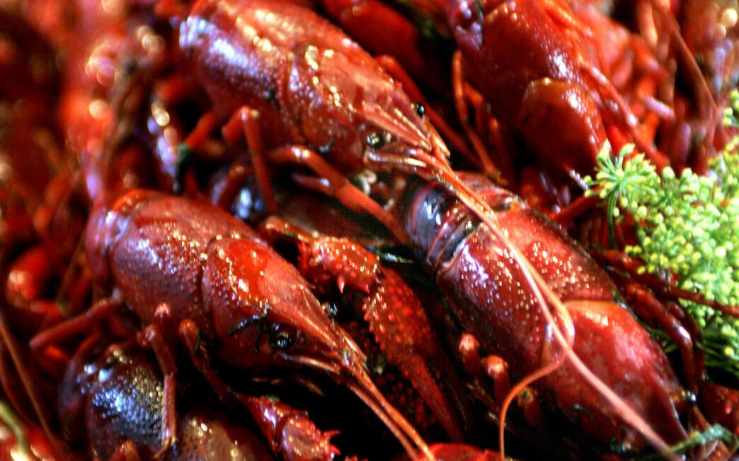 Crayfish feast (Kraftor)