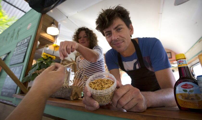 """FILE - In this In this Sept. 21, 2014 file photo, Microbar food truck owner Bart Smit holds a container of yellow mealworms during a food truck festival in Antwerp, Belgium. Dried yellow mealworms could soon be hitting supermarket's shelves and restaurants across Europe. The 27 nations of the European Union gave the greenlight Tuesday, May 4, 2021 to a proposal to put the Tenebrio molitor beetle's larvae on the market as a """"novel food."""" (AP Photo/Virginia Mayo, File)"""