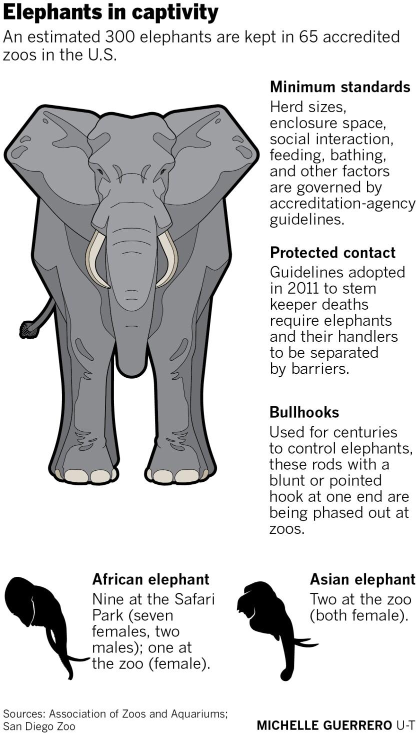 485886-w1-sd-me-elephants-in-captivity.jpg