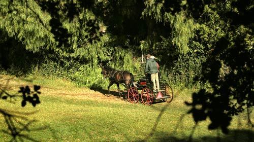 Orange Park Acres is a horse lover's dream