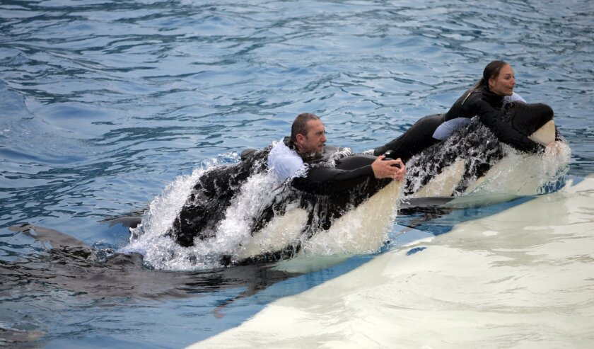 SeaWorld revamped the Shamu show in 2006 for the first time in eight years.