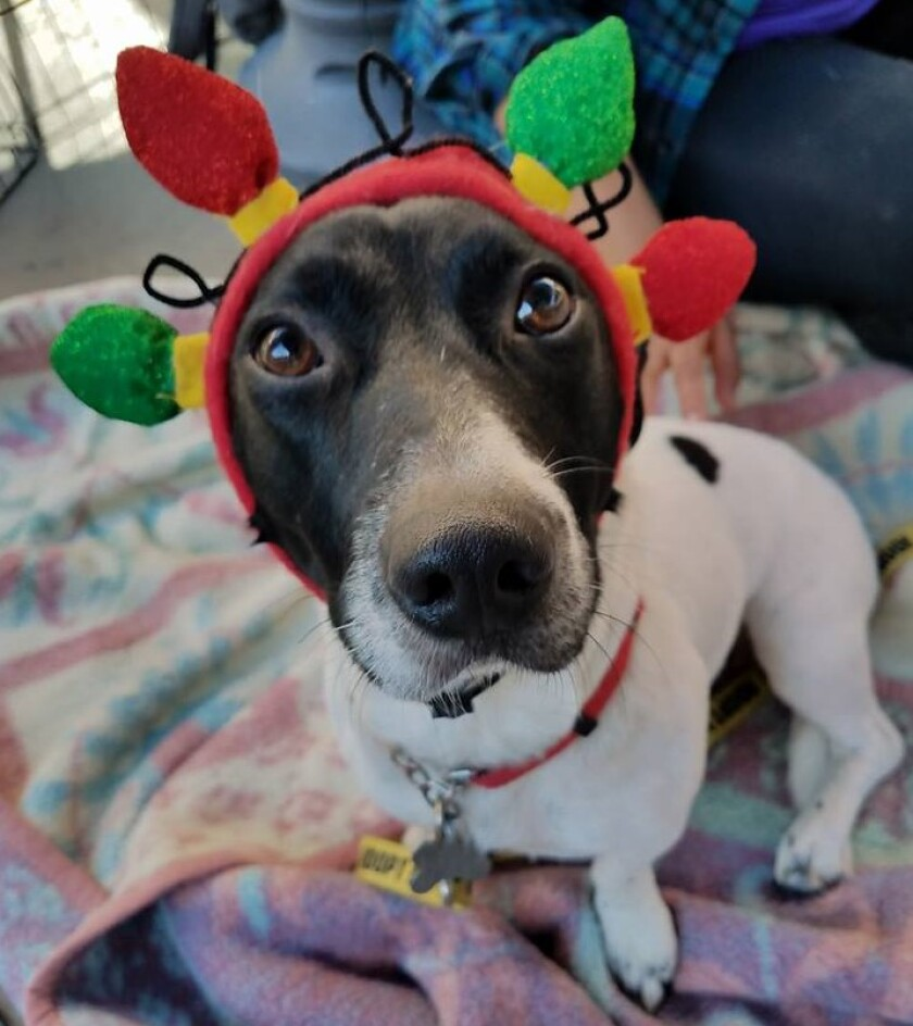 The San Diego Humane Society has some tips for keeping your pets safe this Halloween.
