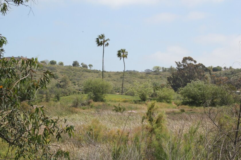 Bay Club's new lease for the Fairbanks Ranch Country Club will include a restoration of the habitat adjacent to the golf course. Photo by Karen Billing