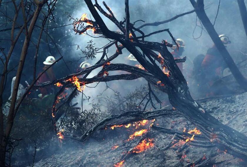 Bomberos combaten el incendio forestal en el oeste del condado de Miami-Dade (sureste de Florida). EFE/Archivo