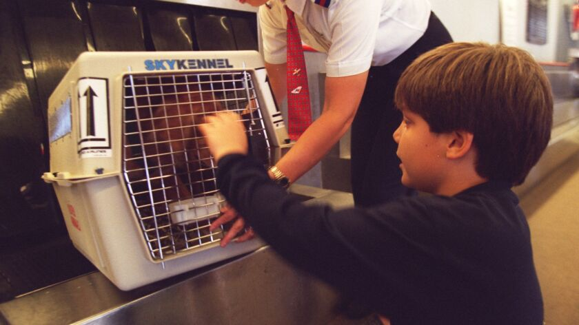 Chris Populus, 8, sees off the family dog, Dodger, as a United Airlines employee loads the dog for its flight to New York from John Wayne Airport.