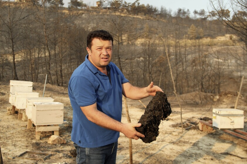 A Turkish beekeeper shows one of his scorched beehives