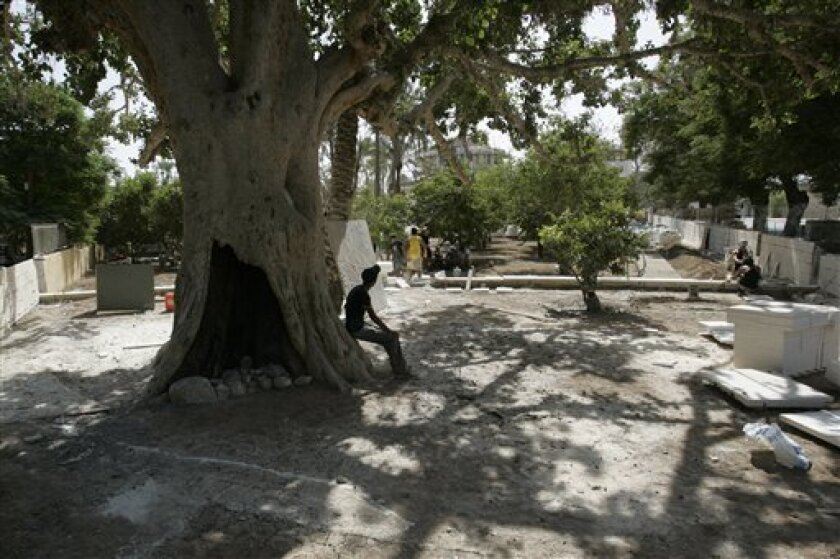 A Palestinian boy pauses in the base of an ancient sycamore tree in the West Bank city of Jericho, Friday, Oct.1, 2010. A gnarled sycamore that tradition says is featured in the biblical tale of Jesus and the tax collector is now taking center stage in the Palestinians' attempt transform this ancient desert backwater into a tourism hub. (AP Photo/Majdi Mohammed)