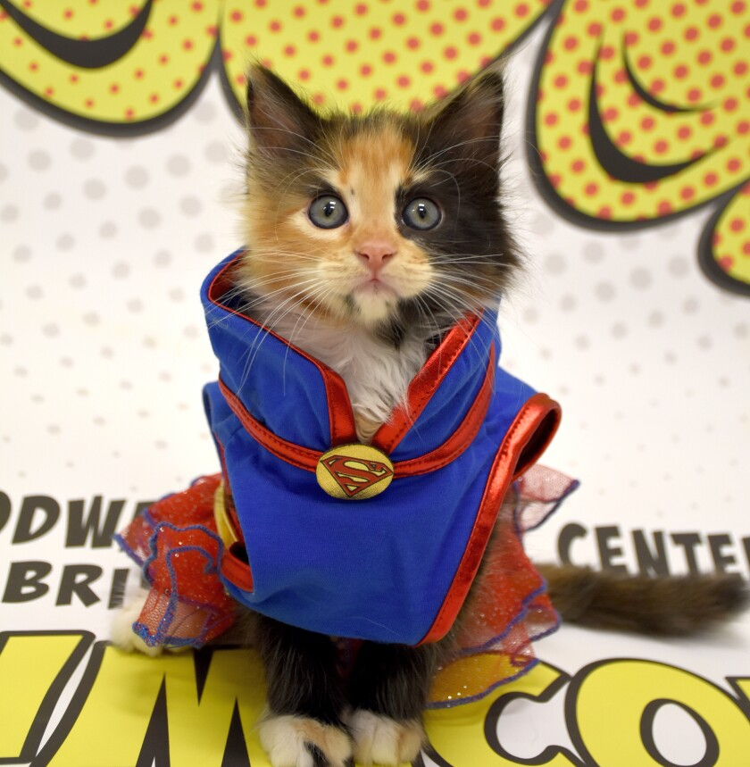 A cat dressed up as a superhero at PAWmicon
