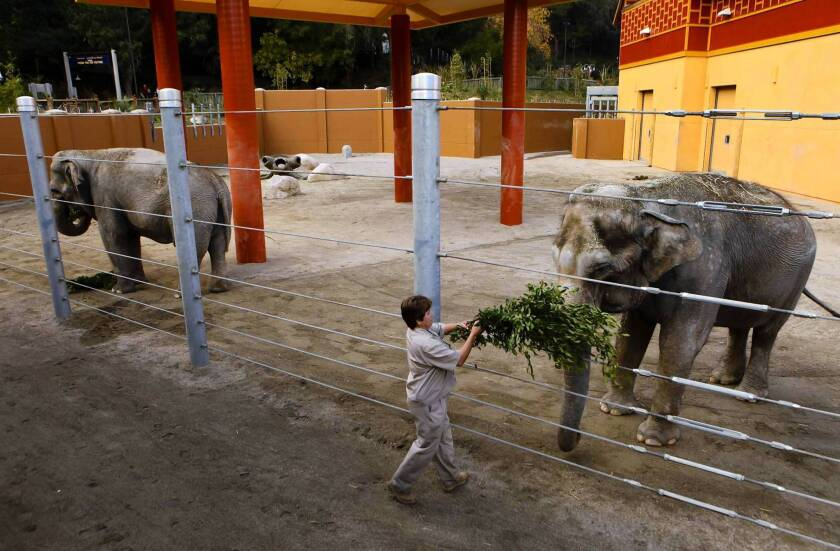 Tina and Jewel are the L.A. Zoo's two female Asian elephants. The zoo's elephants have been a subject of controversy for years.
