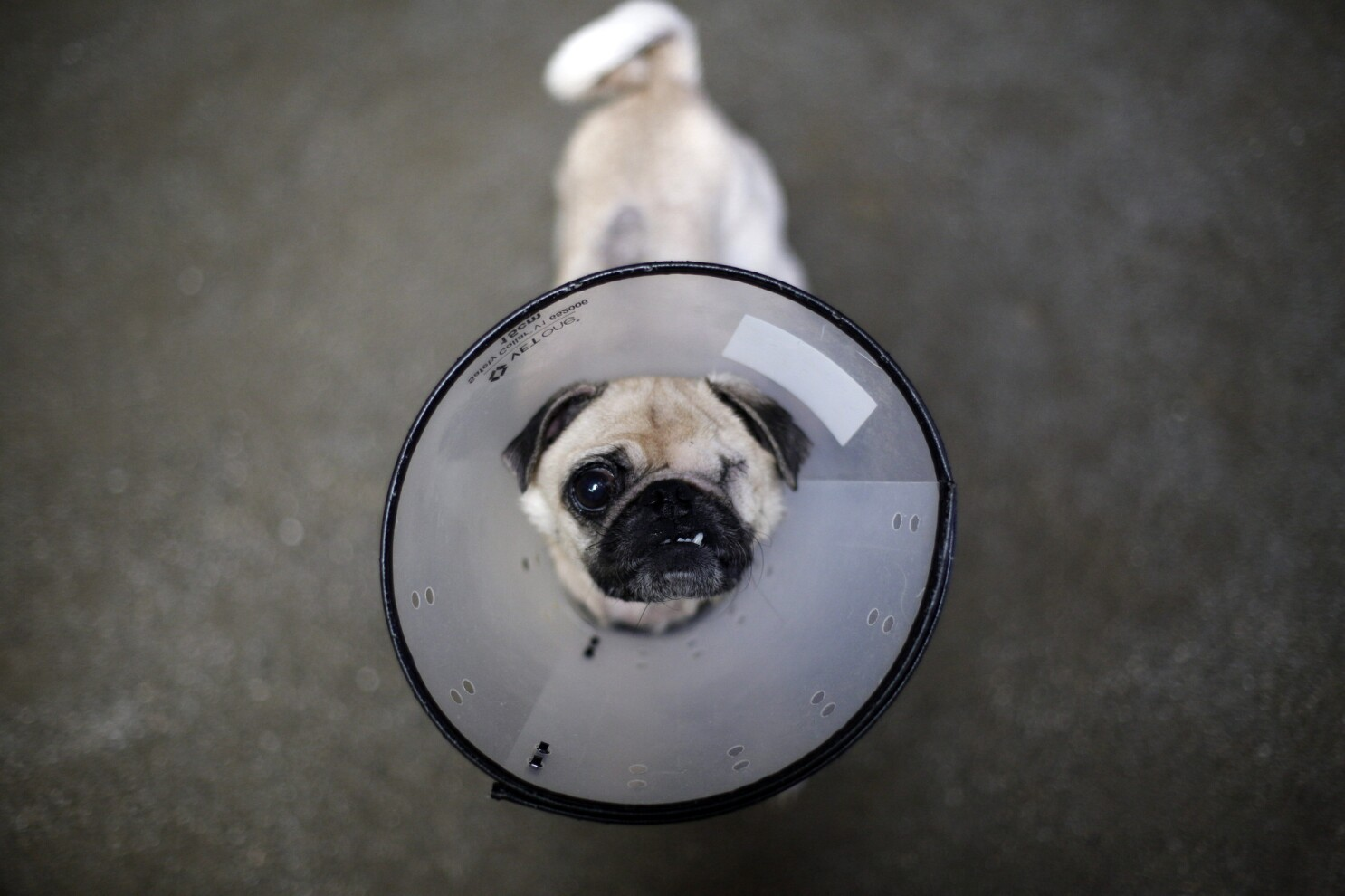 These SoCal animal rescue groups count on you to help spare