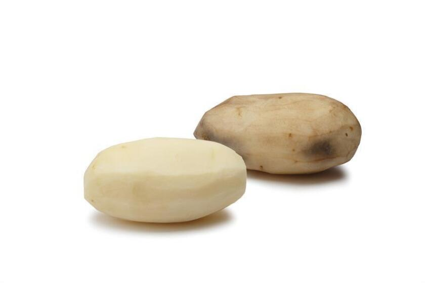 Fotografía sin fecha cedida por J.R. Simplot donde se muestra una comparación entre una patata natural (marrón) y otra manipulada genéticamente (blanca) usando la tecnología CRISPRCas9 para reducir manchas o moratones. EFE/Cortesía J.R. Simplot/SOLO USO EDITORIAL/NO VENTAS