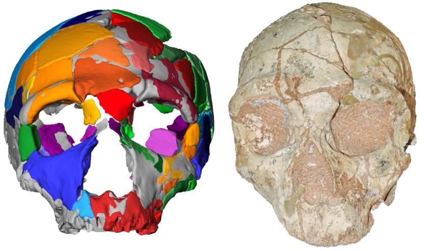 Apidima 2 cranium