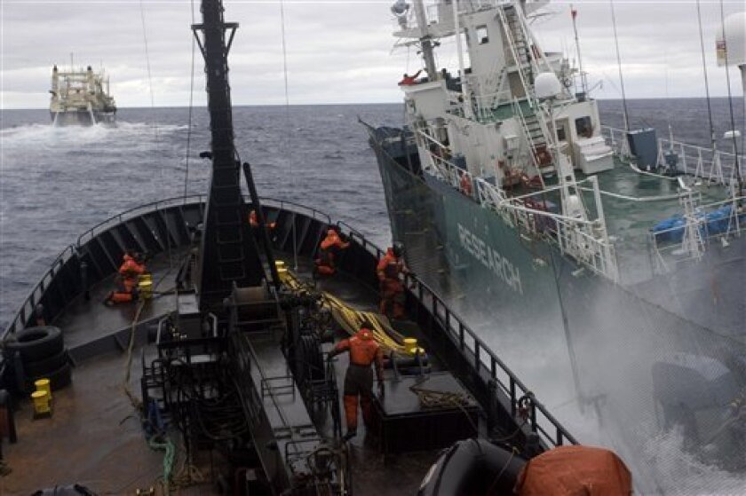 In this photo released by Sea Shepherd, anti-whaling group Sea Shepherd's ship the Bob Barker, left, and Japanese harpoon boat the Yushin Maru 3 collide in the waters off Antarctica Saturday, Feb. 6, 2010. It was the second major clash this year in the increasingly aggressive confrontations between the two sides. No one was reportedly injured in the latest strike. (AP Photo/Sea Shepherd, Glenn Lockitch) NO SALES, EDITORIAL USE ONLY