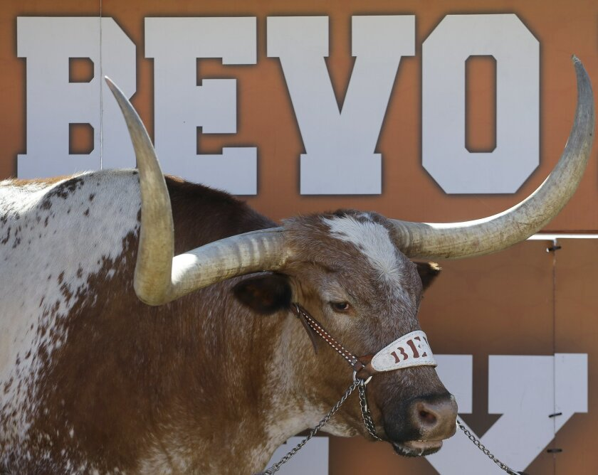 FILE- In this Nov. 2, 2013 file photo, Texas mascot Bevo is seen during an NCAA college football game in Austin, Texas. College sports fans have a strong emotional connection with live animal mascots. The new Bevo, known as Bevo XV, was selected among 400-500 longhorn steers from across Texas and w
