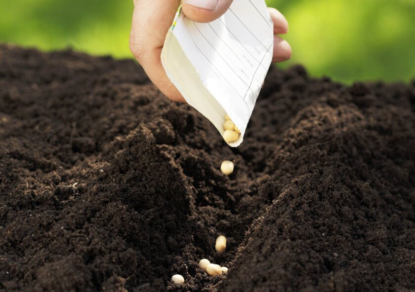 Growing vegetables from seeds gives you access to unusual and heirloom varieties.