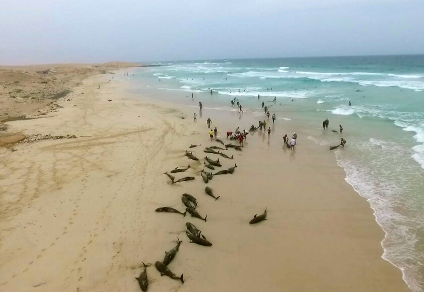 Cape Verde Dolphin Deaths